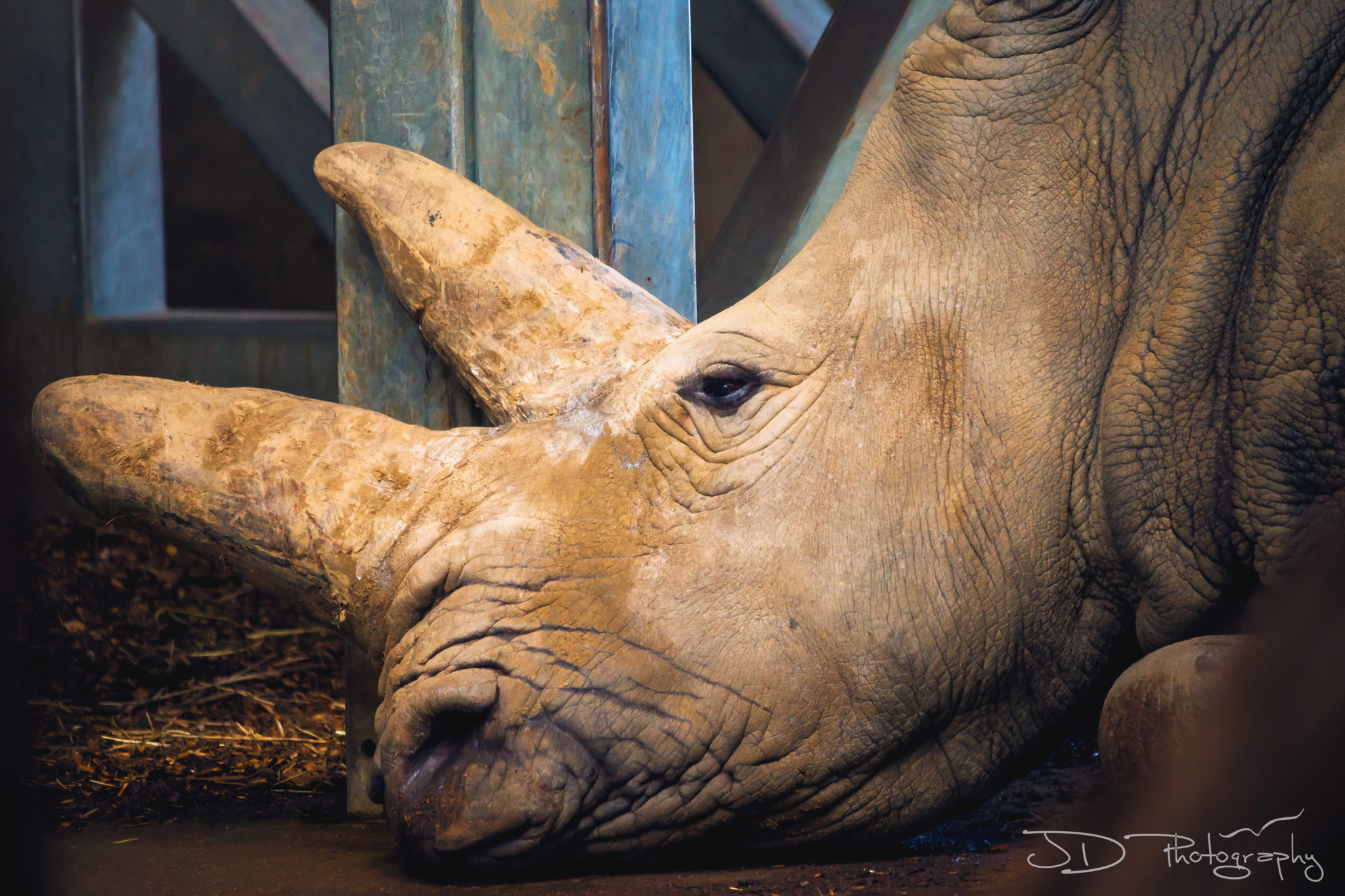 Marwell-Rhino-1-FINAL-WM