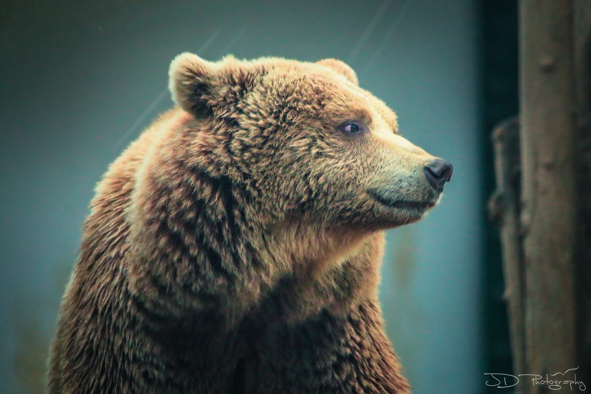 rome-bear-1-final-WM